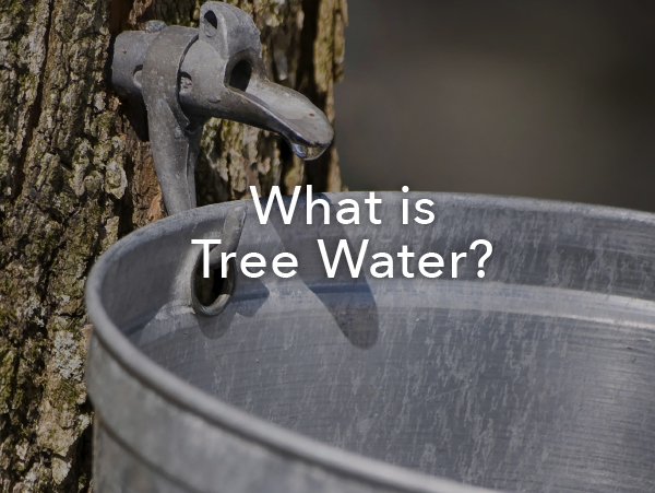 What is Tree Water?